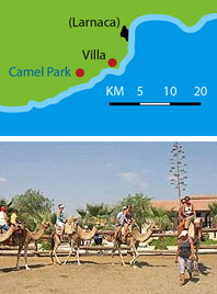 camel park in Cyprus